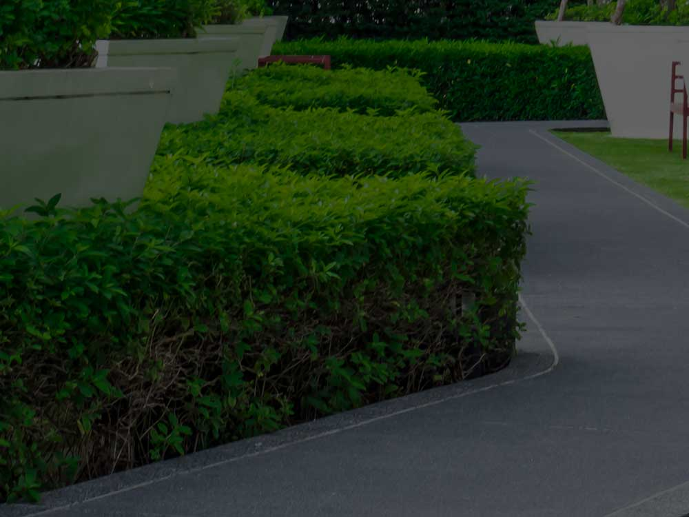 Mountainside Commercial Landscaping