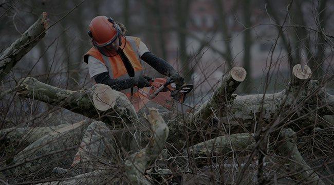 Westfield Tree Service