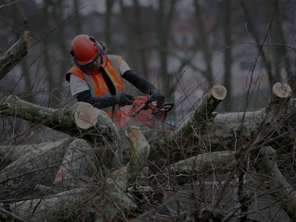 Westfield Tree Removal